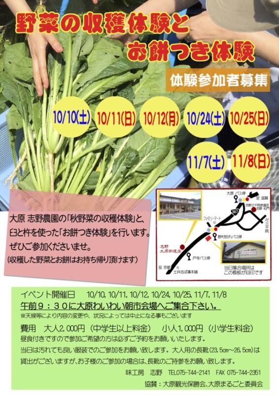 小松菜収穫体験