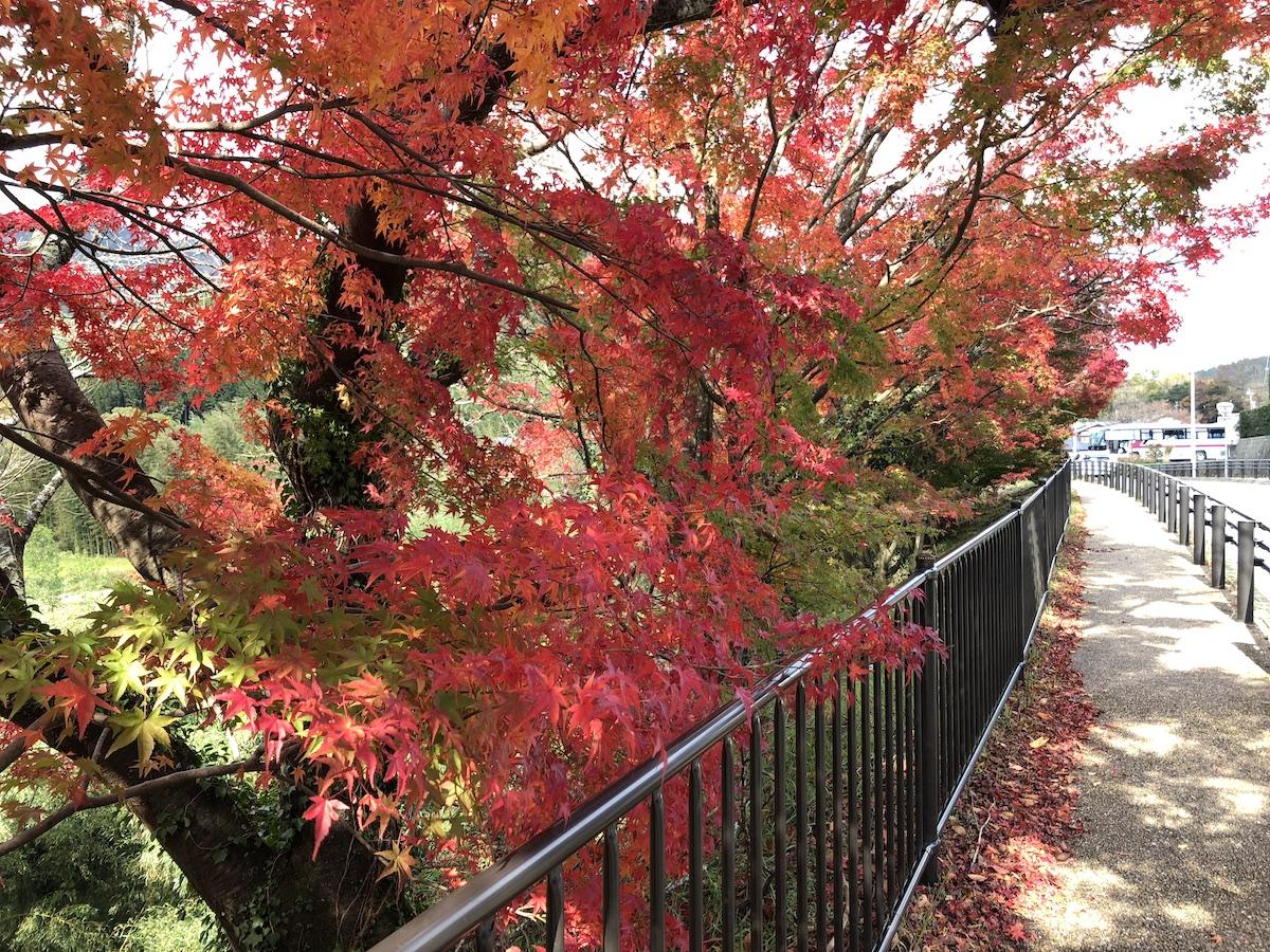 紅葉最盛期